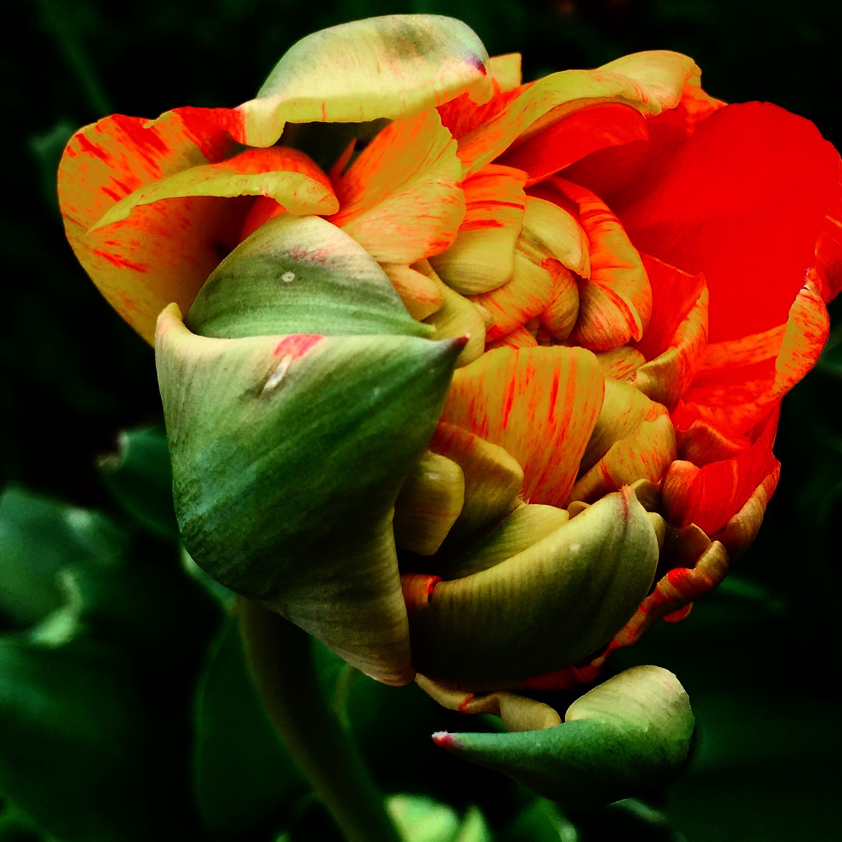 The Rebirth Of Spring Thirdeyemom